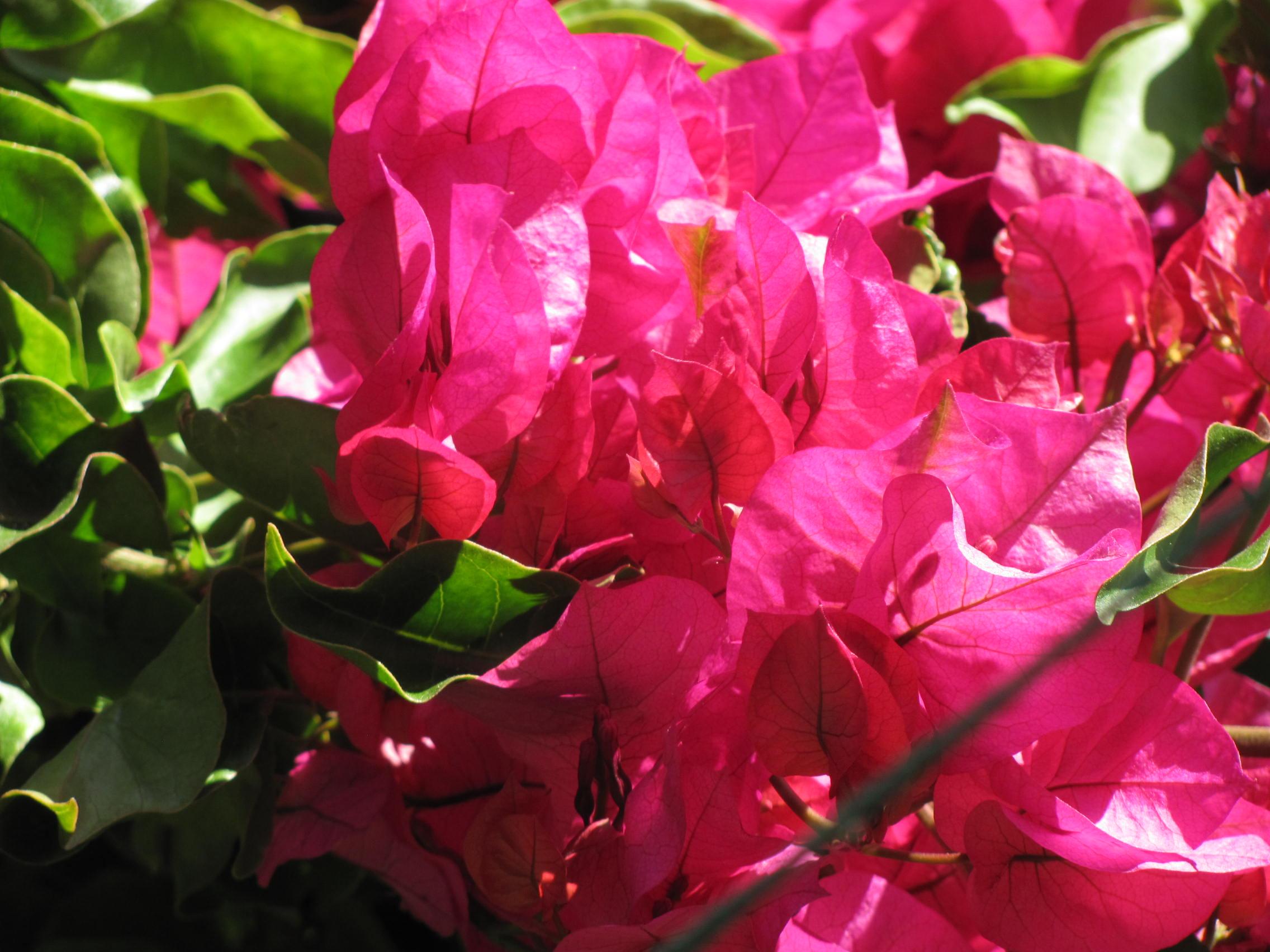 Ilanga khaya urlaub im sonnigen s dafrika kapstadt for Pflanzen laden berlin